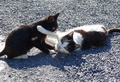 Unsere Hofkatzen beim Spielen
