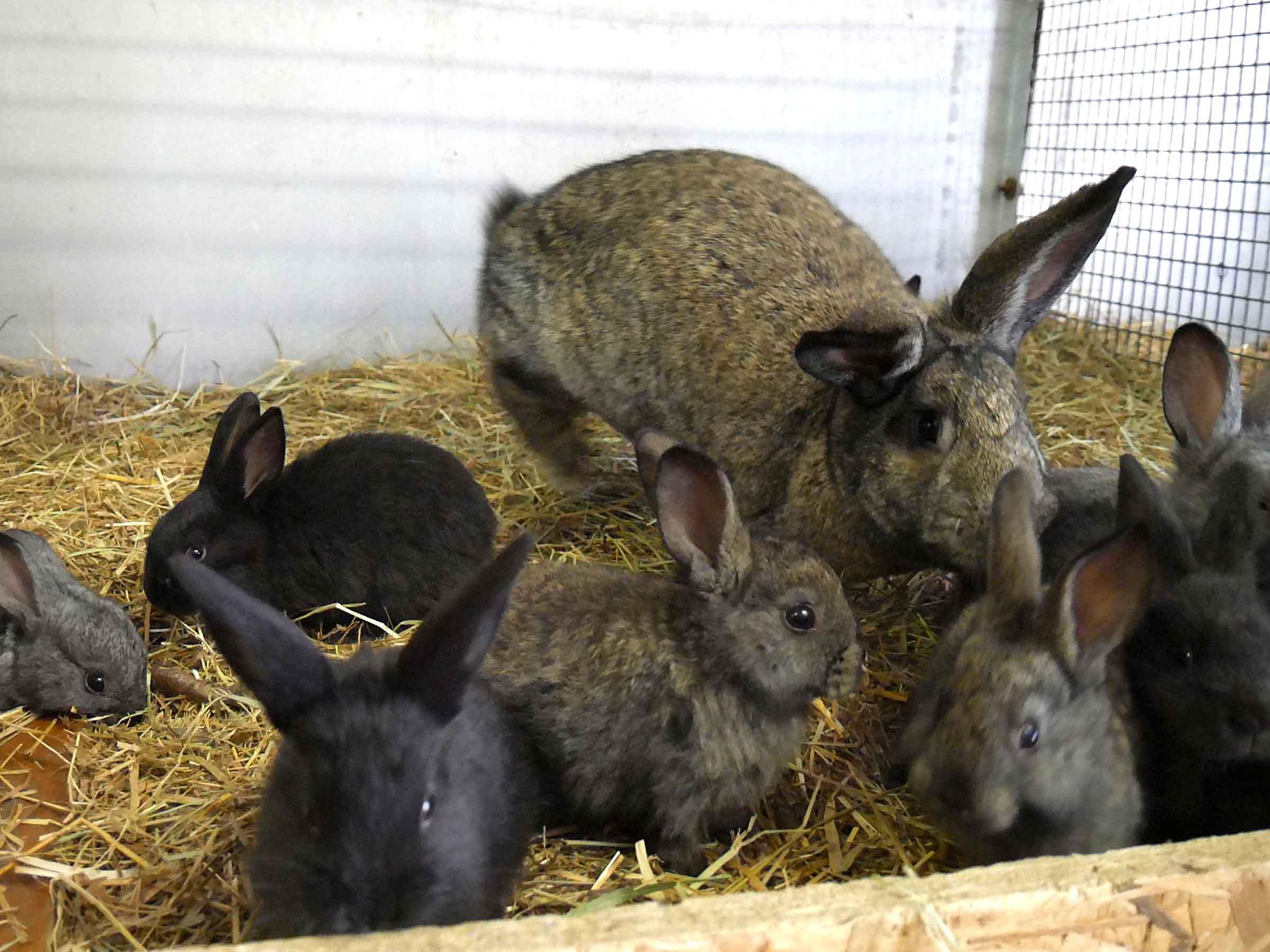 in großzügigen Kaninchenboxen