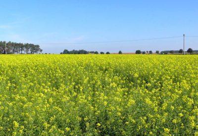 Landwirtschaft in Thiendorf